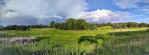Landscape-Option-2-(MCCD)